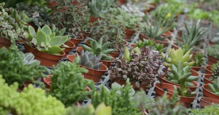 Photo for Green succulent plants in pots - Royalty Free Image