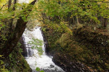 Photo pour Ruisseau de montagne Oirase Towada, Japon - image libre de droit