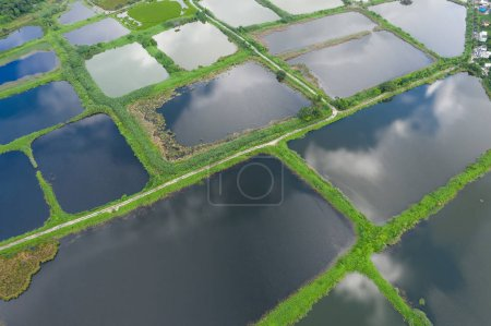 Aerial view Fish hatchery ponds