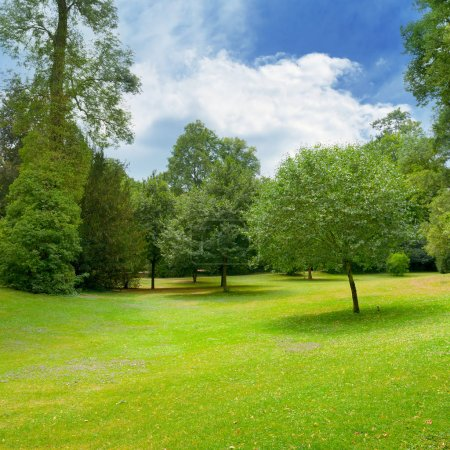 Photo for Beautiful meadow covered with grass in the park and a beautiful sky with white clouds. - Royalty Free Image
