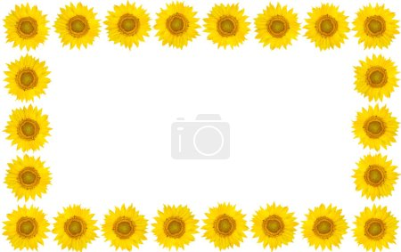 Rahmen aus Sonnenblumenblüten auf isoliertem weißem Hintergrund. Ansicht fr