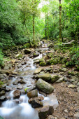 View of a small creek in the middle of a rain forest in Panama