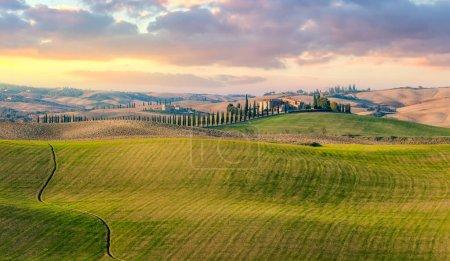 Majestuosa vista panorámica del paisaje natural típico de la Toscana. Hermosas colinas al amanecer, cipreses, campos y caminos rurales. Italia, Europa