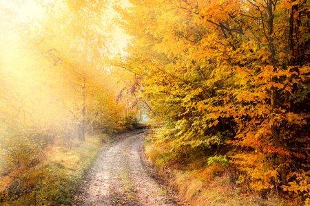 Photo pour Route d'automne en forêt dorée, belle saison d'automne, paysage naturel - image libre de droit