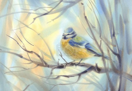 little bird tit on the branch watercolor background