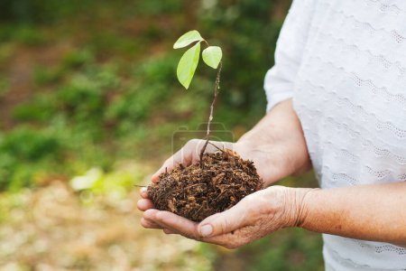 Photo for Hands of an old woman hold an oak sprout. Planet conservation safe - Royalty Free Image