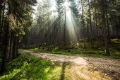 Sun rays between trees in forest, off road adventure.