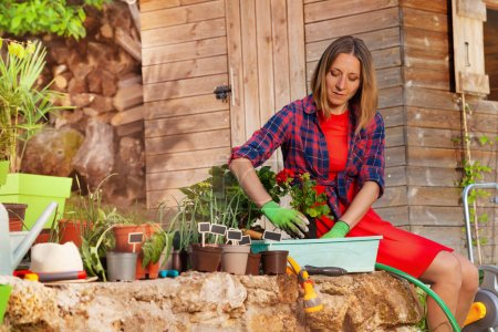 Photo pour Jolie jeune femme plantant du géranium rouge dans un récipient dans le jardin - image libre de droit