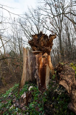 Photo pour Photo d'arbres en automne pendant la chute de l'automne. - image libre de droit