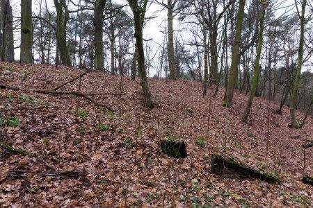 Photo pour Photographié la forêt sombre à l'automne. Arbres nus par temps nuageux - image libre de droit