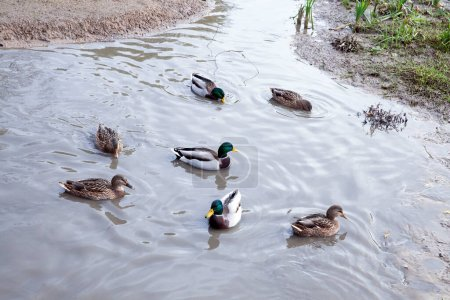 Photo for Photo of a small lake made close-up. The water is dirty - Royalty Free Image