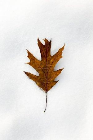 Photo pour Couché sur le sol avec des feuilles jaunes tombées sur le sol à l'automne. Dérives de neige en hiver. Photo en gros plan avec une petite profondeur de champ - image libre de droit