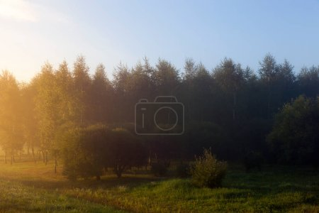 Photo for Summer landscape with fog during sunrise. Part of the photo is lit by the yellow light of the sun, and part of it is dark and not lit. above the forest a blue sky - Royalty Free Image