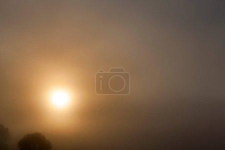 Photo pour Soleil jaune qui brille dans le brouillard le matin. Le haut de l'arbre à feuilles caduques est visible en bas à gauche. photo sombre avec ciel - image libre de droit