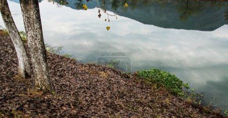 Foto de El río en un bosque en otoño - Imagen libre de derechos
