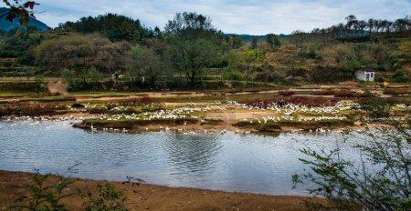 Photo pour Oiseaux au lac - image libre de droit