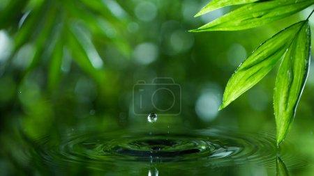 Photo pour Feuilles vertes fraîches avec des gouttes d'eau au-dessus de l'eau, relaxation avec le concept de gouttes d'eau - image libre de droit