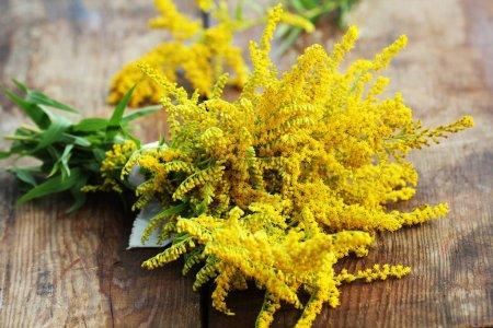 Bouquet de Solidago Goldenmosa jaune ou verge d'or sur fond en bois