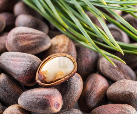 One opened pine nut over unshelled nuts. Macro. Food background.