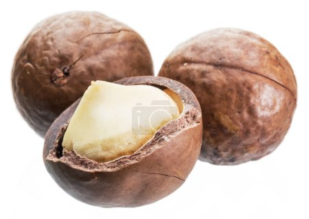 Macadamia nuts or bush nuts isolated on white background.