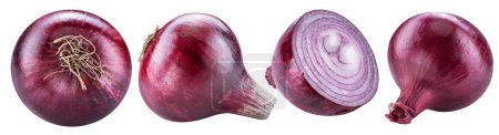 Red onion bulbs and cross section of onion. File contains clipping path for each item.