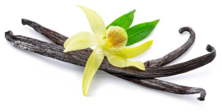 Dried vanilla stick and orchid vanilla flower isol...