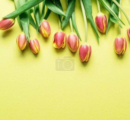 Photo pour Délicates tulipes fraîches sur fond jaune. Vue du dessus . - image libre de droit
