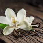 Dried vanilla sticks and vanilla orchid on wooden ...