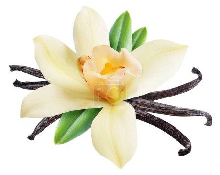Photo pour Bâtonnets de vanille séchés et fleur de vanille d'orchidée. Le fichier contient le chemin de coupe . - image libre de droit