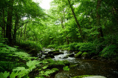 scenic view of river and moss in the forest