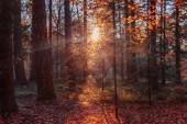 evening in autumn dutch forest
