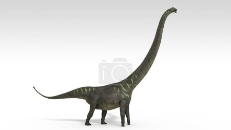 3d rendering of the mamenchisaurus dinosaur isolat...