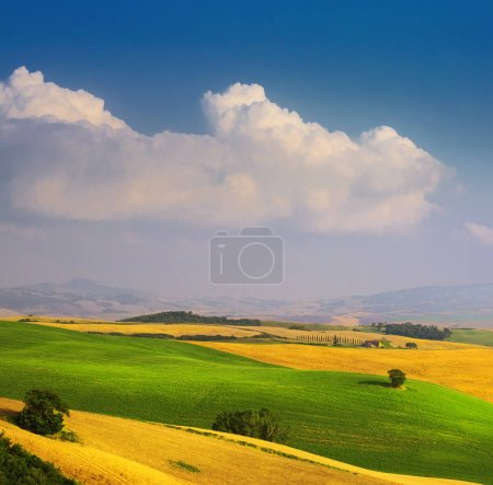Photo for Italian summer countryside landscape; golden fields and blue sky - Royalty Free Image