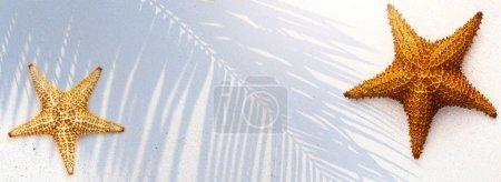 Foto de Tropical Island Sand con la concha de estrellas de mar y la sombra de las hojas de palma - Imagen libre de derechos