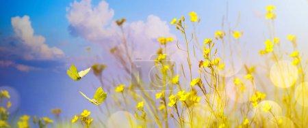 Foto de Flores amarillas en el campo - Paisaje abstracto de otoño - Imagen libre de derechos