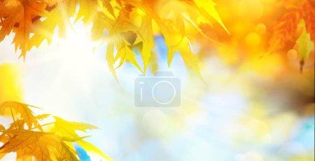 Foto de Hojas de otoño de fondo, hoja de arce amarillo contra cielo soleado - Imagen libre de derechos