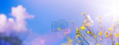 Foto de Flores amarillas en verano campo de otoño en el cielo azul de fondo con sol y mariposa blanca. Paisaje natural de verano con espacio de copiado - Imagen libre de derechos