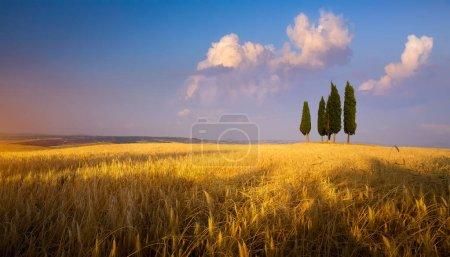 Foto de Paisaje paisajístico otoñal de Italia, tierras de cultivo de campos de trigo y árbol de ciprés sobre sk al atardecer - Imagen libre de derechos