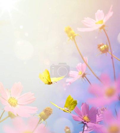 Foto de Fondo floral del campo de otoño; flor de otoño y mariposa al sol de la puesta del sol - Imagen libre de derechos