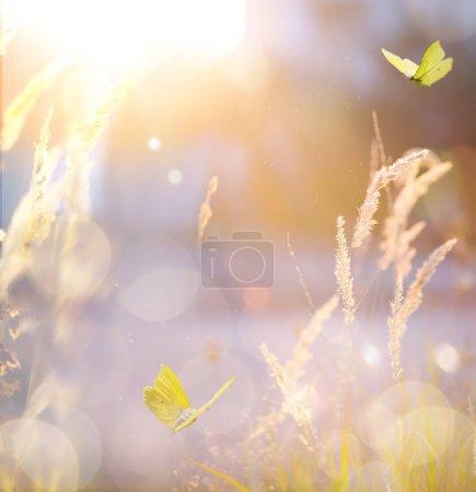 Foto de Arte otoño paisaje soleado; abstracto campo naturaleza backgroun - Imagen libre de derechos