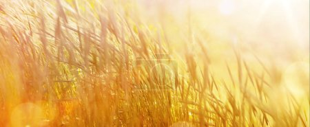 Foto de Arte abstracto natural otoño de fondo; prado soleado otoñal - Imagen libre de derechos