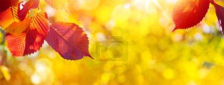 Foto de Art Autumn Leaves on the sun. Blurred  Sunny Fall background - Imagen libre de derechos