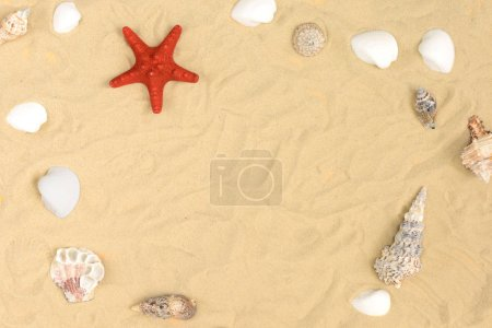 On the sand lie different seashells and a red starfish. In the center there is a free place for text. Beautiful summer layout.