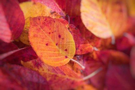 Foto de Las hojas de otoño en el parque de otoño hermoso. Enfoque selectivo. - Imagen libre de derechos