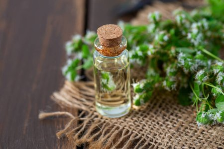 Photo pour Huile essentielle à l'herbe de marjolaine fraîche - image libre de droit