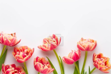 Photo for Spring flowers. Tulips on pastel colors background. greeting card Retro vintage style. Mother day, easter greeting card. - Royalty Free Image