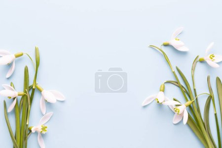 Photo for Fresh snowdrops on blue background with place for text. Spring greeting card. Flat lay. - Royalty Free Image