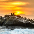 Sunrise at Seal Island. South African (Cape) fur s...