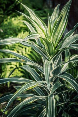 Photo pour Plante exotique, gros plan dans la serre - image libre de droit