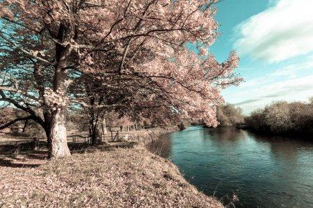 Photo pour Beau fond imaginaire avec des feuilles de conte de fées dans un ciel lumineux rose et bleu - image libre de droit